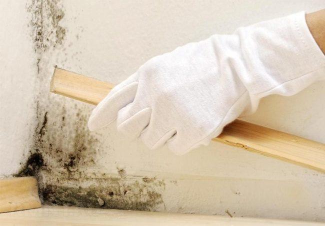 Чем убрать грибок на бетоне