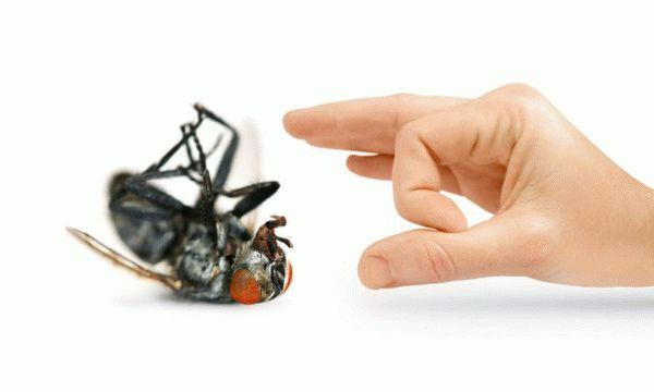 Как избавиться от мух в загородном доме