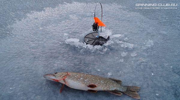 Ловля живца зимой занимает достаточное количество её самому