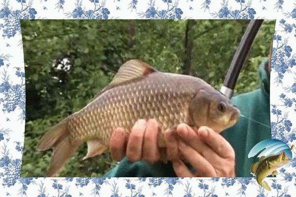 Как приготовить перловку для рыбалки