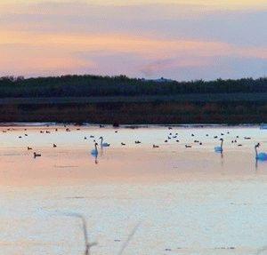 Рыбалка в Оренбургской области 2019: отчеты, водоемы, платная рыбалка