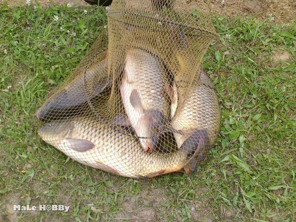 Рыбалка в Ленинградской области и Санкт-Петербурге, отзывы