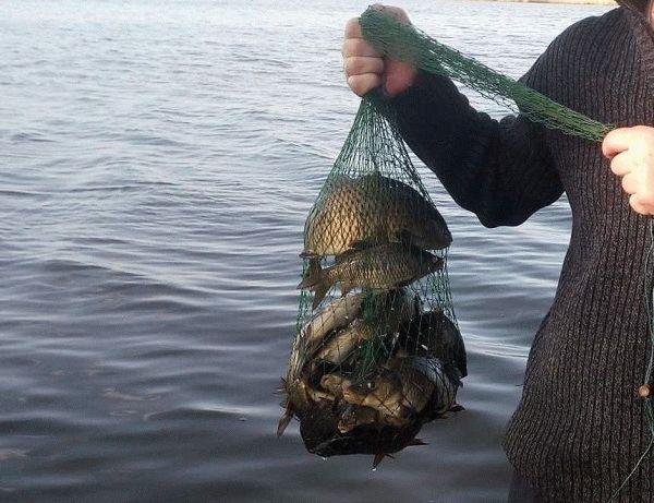 как приготовить перловку для рыбалки на карася