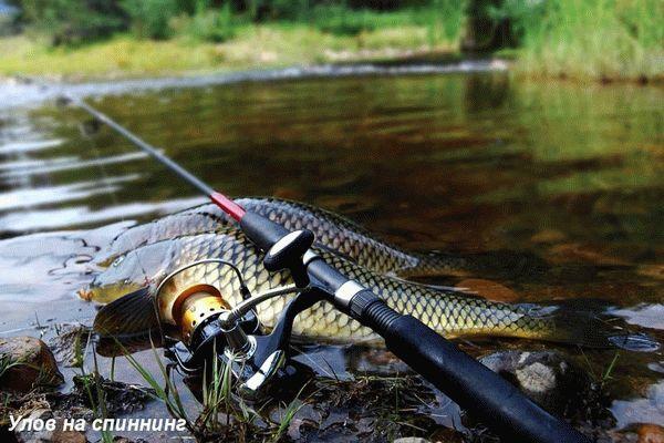 Как ловить на спиннинг с берега на реке видео